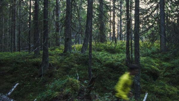 Härnö Trail skog miljö härnö trail traillöpning höga kusten trail